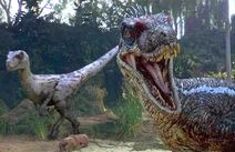 Two velociraptors