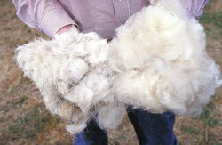 Wool.www.usda.gov