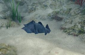 Japanese Bullhead Shark Egg