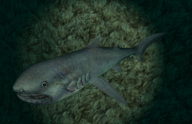 Megamouth Shark | Endless Ocean Wiki | FANDOM powered by Wikia Oarfish Skull