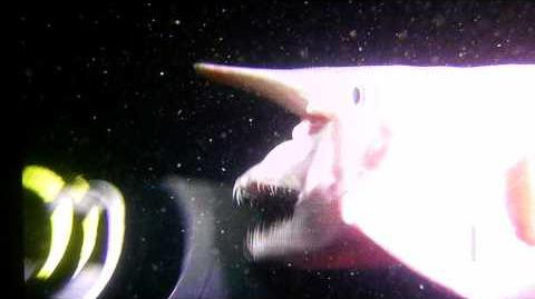The Goblin Shark, Disturbing One of a Kind Footage