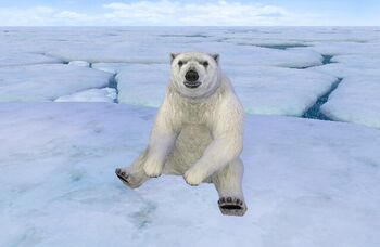Polar bear endless ocean wiki fandom powered by wikia polar bear sciox Choice Image