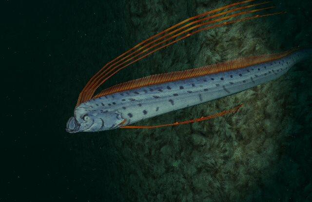 Oarfish | Endless Ocean Wiki | FANDOM powered by Wikia Oarfish Skull
