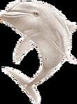 Albino bottlenose png