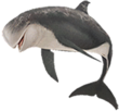Risso's dolphin png