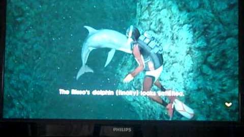 Endless ocean 2 befriending risso's dolphin