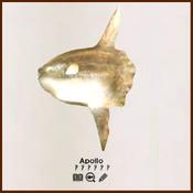 AOE legendary creatures example