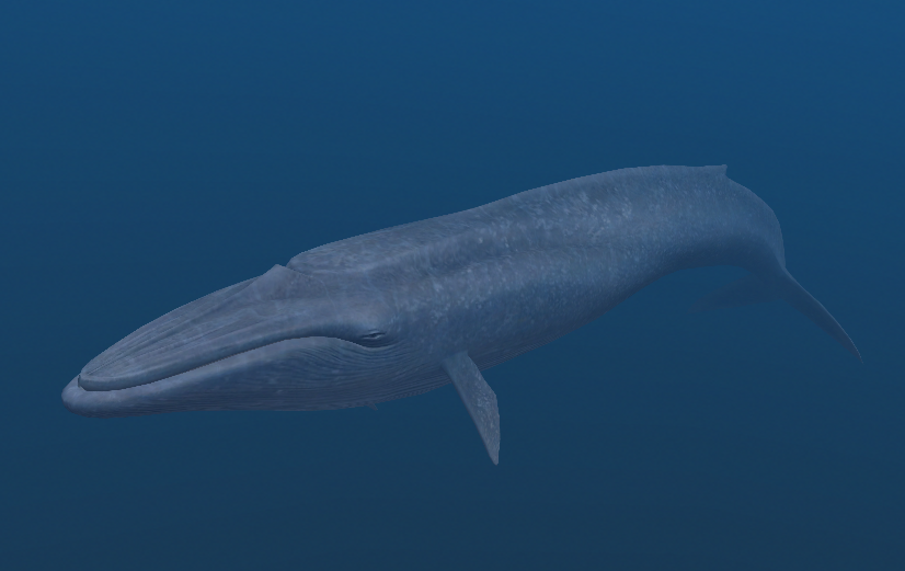 Blue Whale | Endless Ocean Wiki | Fandom