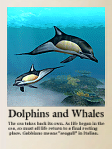 Encyclopedia snap - Dolphins and Whales