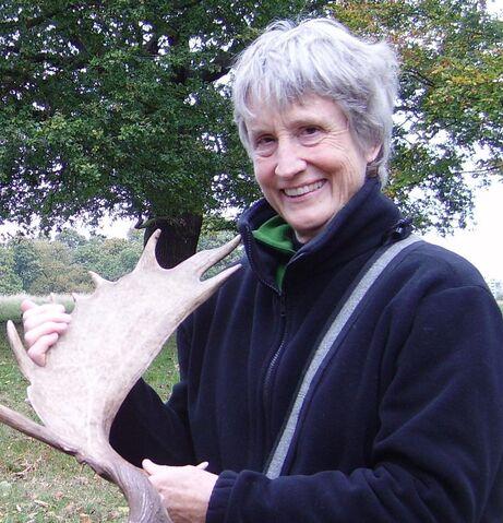 File:Deer walk donna crop antlers web.jpg