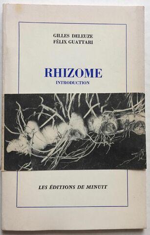 File:Rhizome.jpg