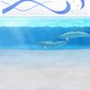 Aquarium (Dolphin Show)
