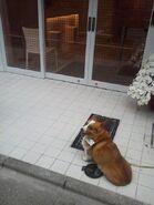 Leon in Akihabara Bay Hotel2