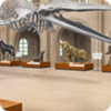 Museum (Inside)