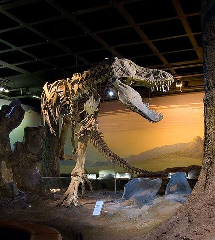 File:538px-Tyrannosaurus.jpg