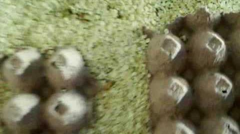 Breeding Superworms Quick Step By Step