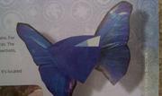 Winged Sapphire