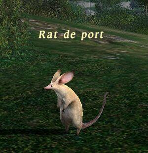 Mob Rat de port