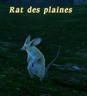 Mob Rat des plaines