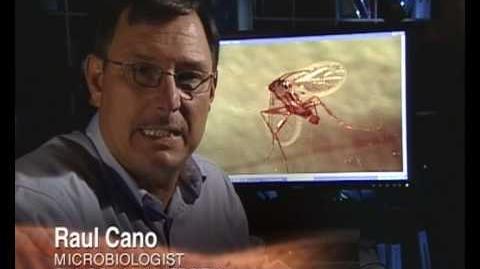 Recreating Dinosaurs