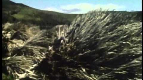 Eyewitness - Seashore pt.1