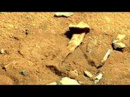 Martian fossils