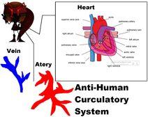 Anti-human curculatory system