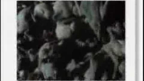 Eyewitness - Mammal pt.1