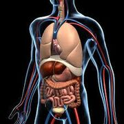 Anatomy 15