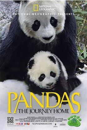 Pandas the journey home