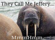 Jeffrey the Walrus