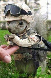 Serving Squirrel