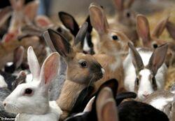 Bunny Population