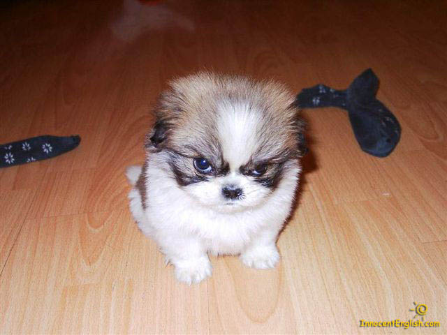 File:Angry puppy.jpg