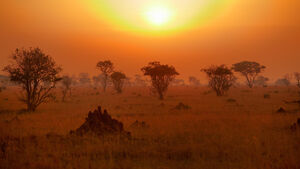African Savanna Based on