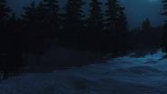 Forrest Night background