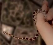 Cleopatra's Asp Cameo