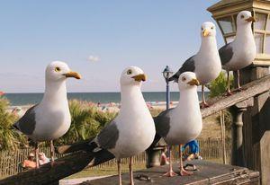 Seagull Crew Based On