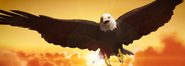 Bald Eagle Cameo Donald Trump vs Hillary Clinton