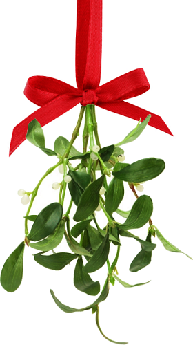 Picture of: picture of mistletoe