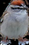 Finch hint