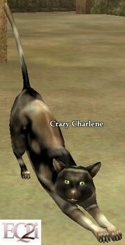 Crazy Charlene