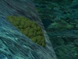 Eggcelent Population