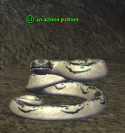 An albino python
