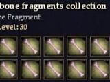 Weathered bone fragments collection