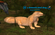 A domesticated dreg