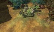 Tox druid ring