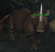 A captive rhino