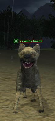 A carrion hound