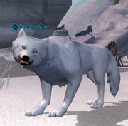 An ice growler